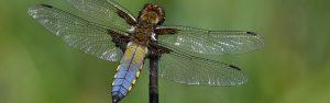 cropped-DSF0422-Libelle-.jpg