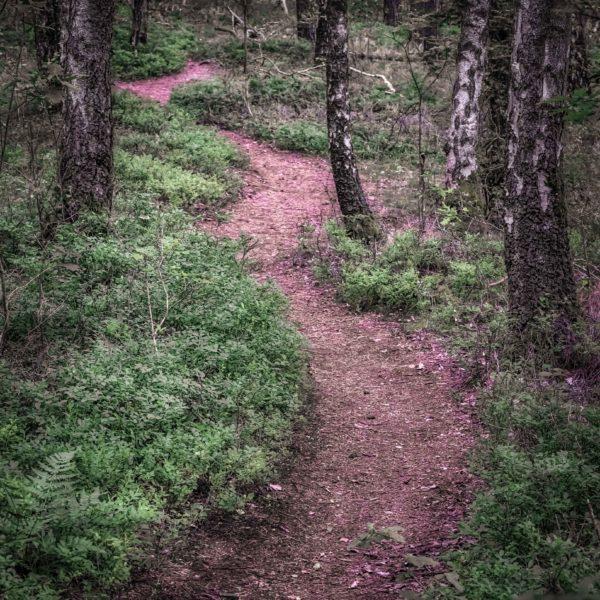 Ein Waldspaziergang (Horst T.)