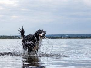 Stefan Hunde in Bewegung 2