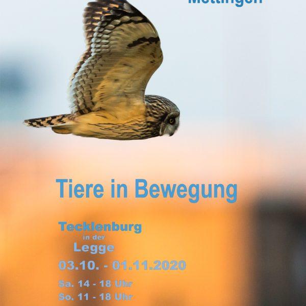 """Jahresausstellung 2020 - """"Tiere in Bewegung"""""""