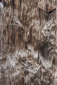 Holzgesicht
