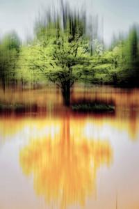 Ibbenbüren Püsselbüren Teiche Baum