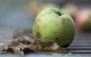 Apfel auf Rost